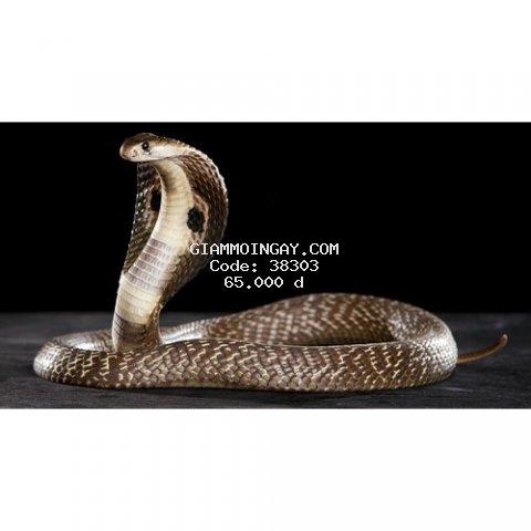 Cao Xoa Bóp Nọc rắn hổ mang