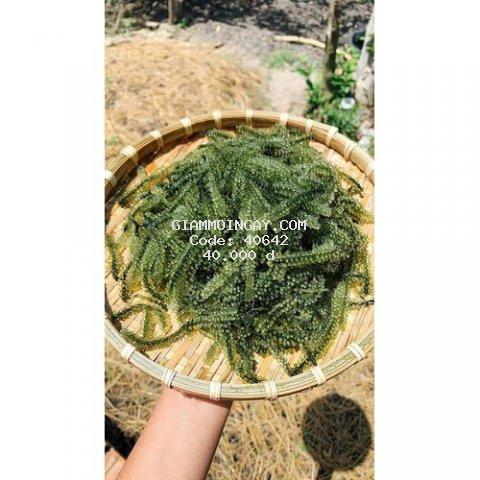 Rong nho sạch Ninh Thuận - 100g